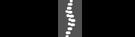 Canadian Chiropractic Association Member